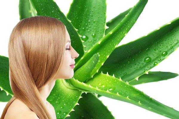 aloe vera para el cuidado del cabello
