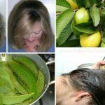 Las hojas de guayaba actúan contra la caída del cabello