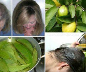 Hojas de guayaba contra la caida del cabello