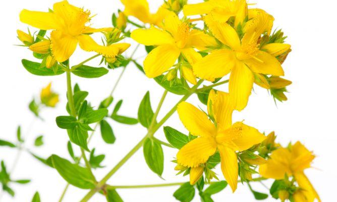 hierba de san juan para la depresión
