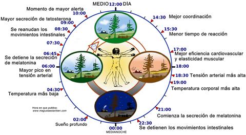 Cómo aumentar la producción natural de melatonina